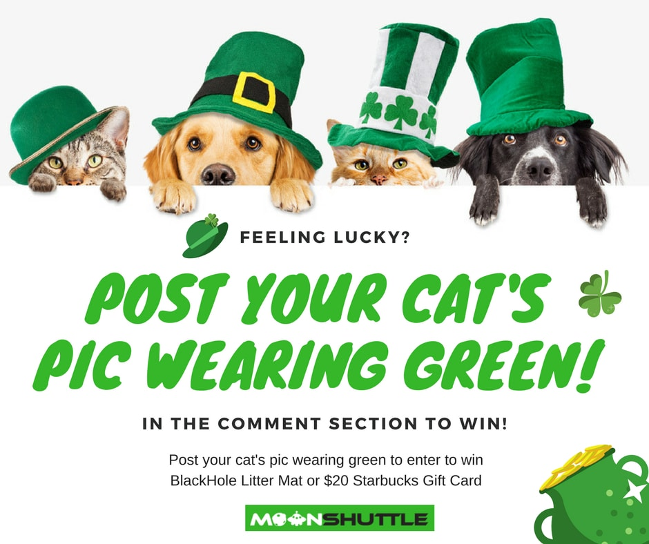 St. Patricks Day Pet Contest